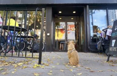 口碑上线新功能 支持一键查询哪些商家允许宠物进店