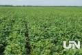 今年全国大豆意向种植面积增长16.4% 仍有90%需进口