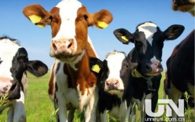 伊利介入辉山乳业资产重整 要求大幅削减企业债务