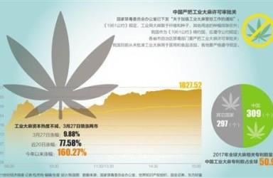 """工业大麻""""爆炒""""背后:多家概念股暴涨 监管严格管控种植、提取"""